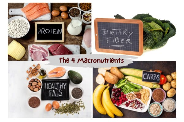 include the 4 macronutrients when learning ho to eat 6 meals a day to gain muscle