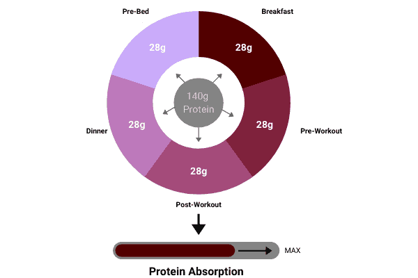 pie chart to show how to split 140 grams of protein over 5 meals to maximise protein absorption