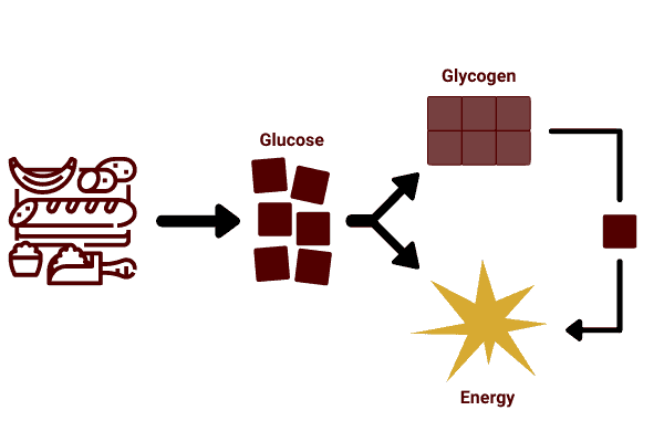 diagram to show carbohydrates are digested into glucose, and this can be used for energy or stored as glycogen