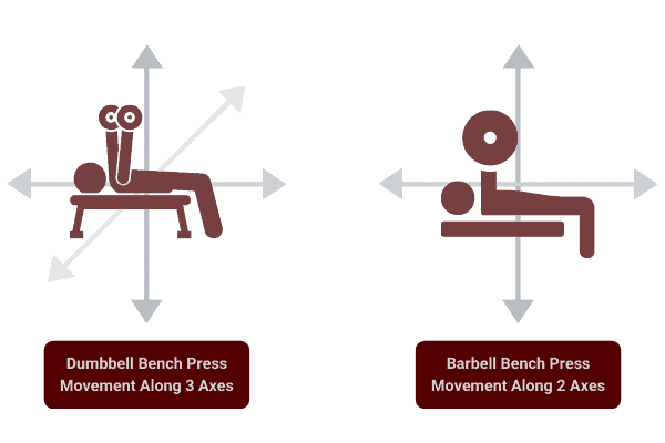 diagram to show range of motion of dumbbells compared to barbells.
