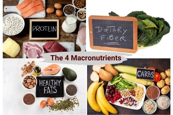 diagram to show the 4 macronutrients for muscle growth