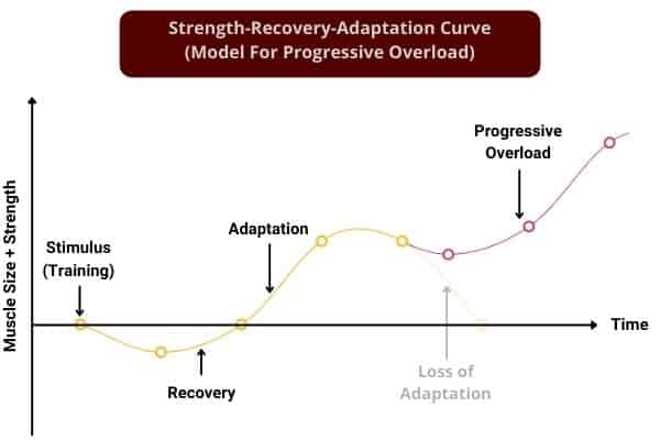 line graph to show the strength-recovery-adaptation model for progressive overload
