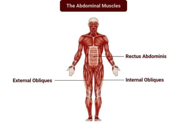 Dumbbells can be used to isolate the abdominal muscles