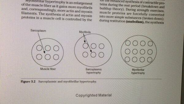you can get stronger with just dumbbells through myofibrillar hypertrophy