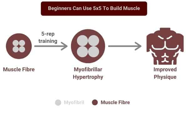beginners can use 5x5 to build muscle