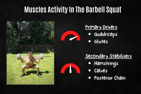 muscles activated in the barbell squat
