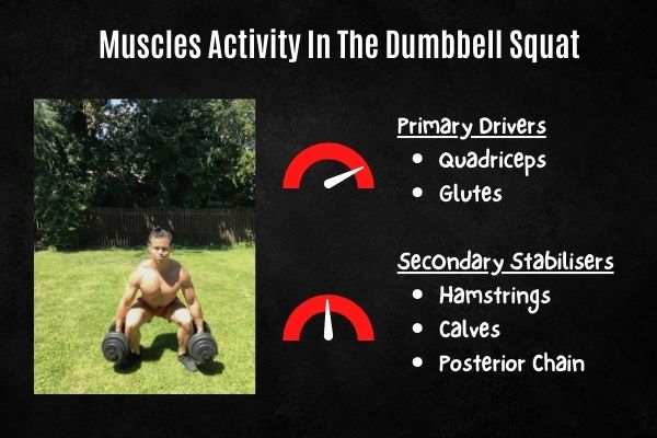 dumbbell squat muscles activated