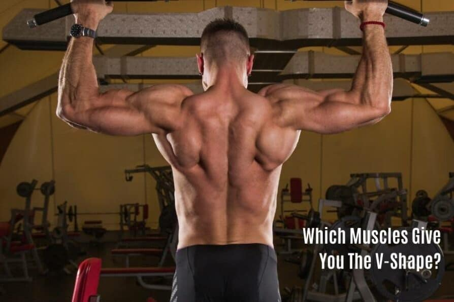 Muscles that give you the v-shape